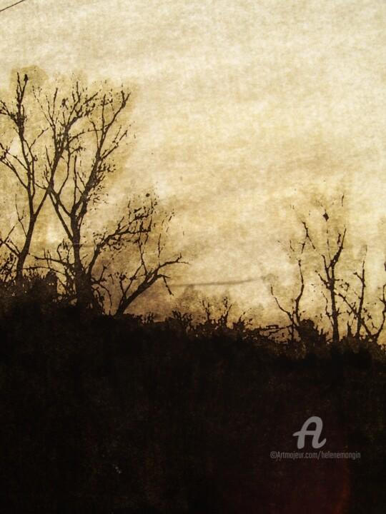helene-mongin-arborescence-sepia-05.jpg