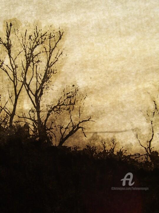 helene-mongin-arborescence-sepia-07.jpg